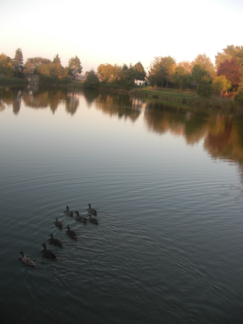 Ducks swimming on lake