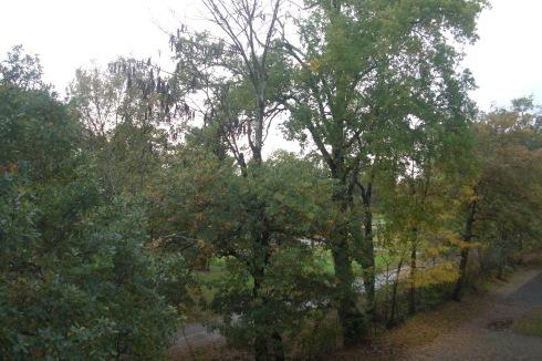Trees Park in Autumn