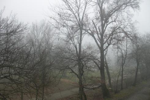 Tree Park Winter Mist