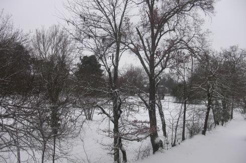 Trees Park in Winter Snow