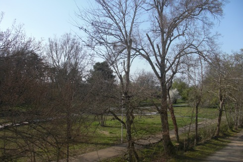 Trees Park in Early Spring